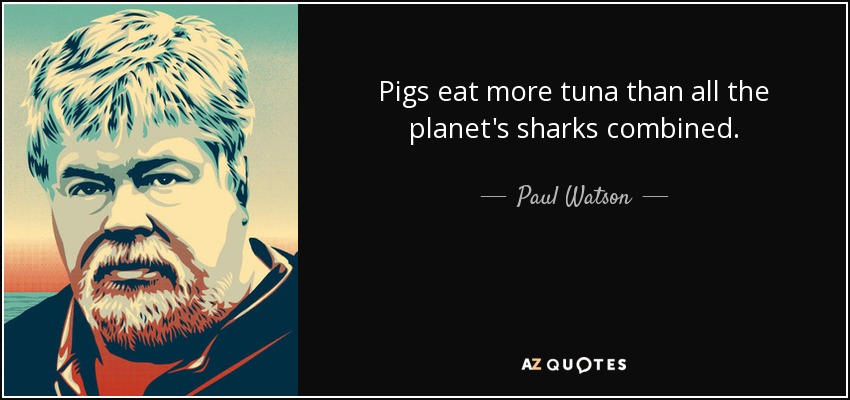 Pigs eat more tuna than all the planet's sharks combined. - Paul Watson
