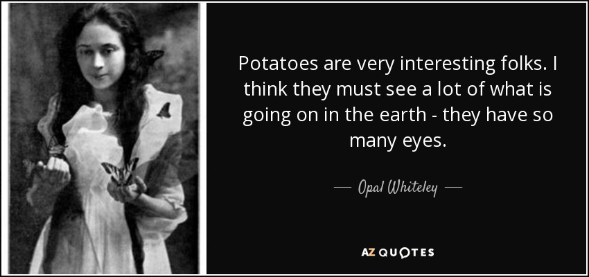 Potatoes are very interesting folks. I think they must see a lot of what is going on in the earth - they have so many eyes. - Opal Whiteley