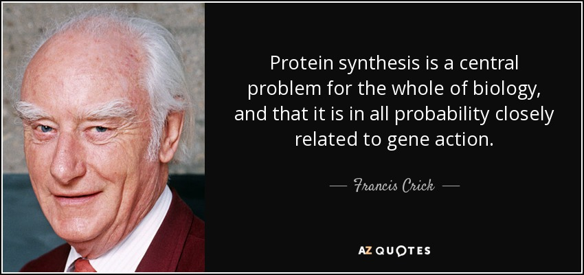 Protein synthesis is a central problem for the whole of biology, and that it is in all probability closely related to gene action. - Francis Crick