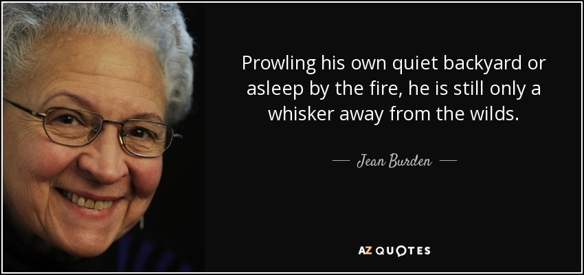 Prowling his own quiet backyard or asleep by the fire, he is still only a whisker away from the wilds. - Jean Burden
