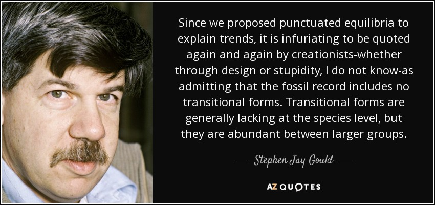 Since we proposed punctuated equilibria to explain trends, it is infuriating to be quoted again and again by creationists-whether through design or stupidity, I do not know-as admitting that the fossil record includes no transitional forms. Transitional forms are generally lacking at the species level, but they are abundant between larger groups. - Stephen Jay Gould