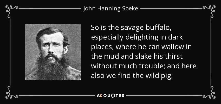 So is the savage buffalo, especially delighting in dark places, where he can wallow in the mud and slake his thirst without much trouble; and here also we find the wild pig. - John Hanning Speke