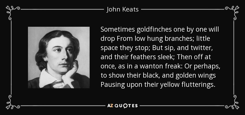 Sometimes goldfinches one by one will drop From low hung branches; little space they stop; But sip, and twitter, and their feathers sleek; Then off at once, as in a wanton freak: Or perhaps, to show their black, and golden wings Pausing upon their yellow flutterings. - John Keats