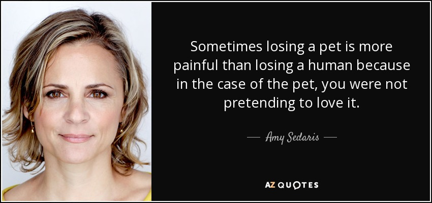 Sometimes losing a pet is more painful than losing a human because in the case of the pet, you were not pretending to love it. - Amy Sedaris