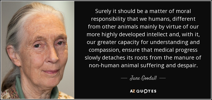 Surely it should be a matter of moral responsibility that we humans, different from other animals mainly by virtue of our more highly developed intellect and, with it, our greater capacity for understanding and compassion, ensure that medical progress slowly detaches its roots from the manure of non-human animal suffering and despair. - Jane Goodall