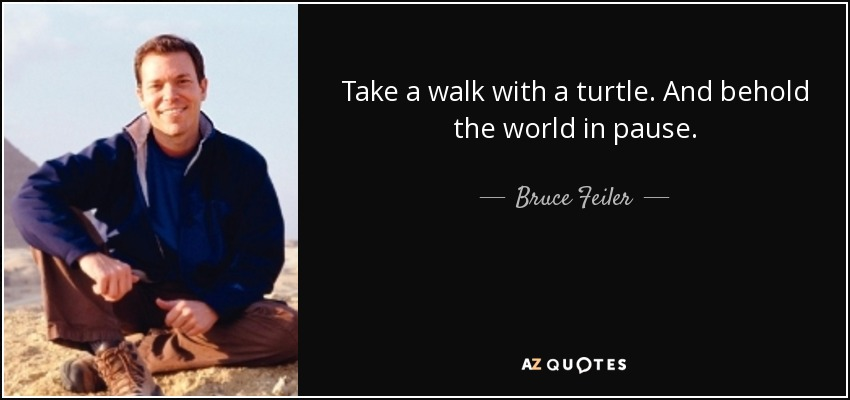 Take a walk with a turtle. And behold the world in pause. - Bruce Feiler