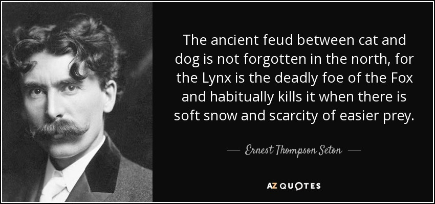 The ancient feud between cat and dog is not forgotten in the north, for the Lynx is the deadly foe of the Fox and habitually kills it when there is soft snow and scarcity of easier prey. - Ernest Thompson Seton