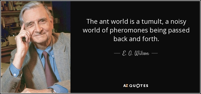 The ant world is a tumult, a noisy world of pheromones being passed back and forth. - E. O. Wilson