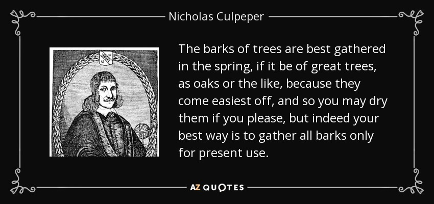 The barks of trees are best gathered in the spring, if it be of great trees, as oaks or the like, because they come easiest off, and so you may dry them if you please, but indeed your best way is to gather all barks only for present use. - Nicholas Culpeper