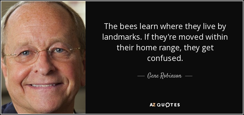 The bees learn where they live by landmarks. If they're moved within their home range, they get confused. - Gene Robinson