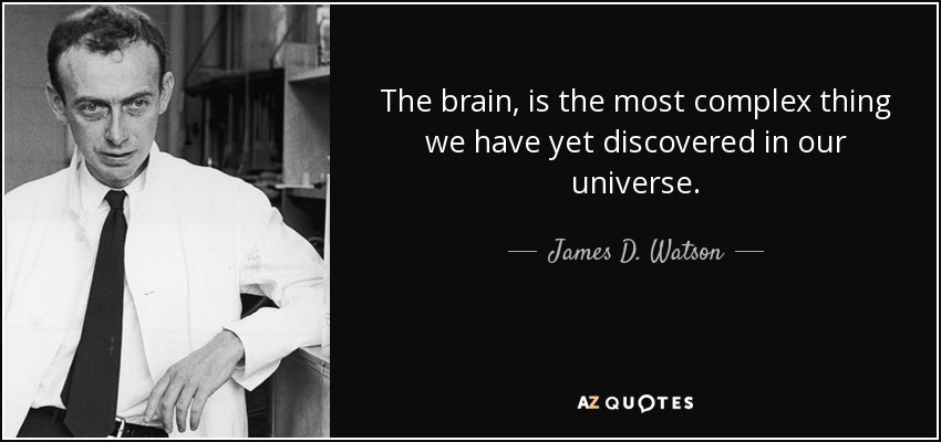 The brain, is the most complex thing we have yet discovered in our universe. - James D. Watson
