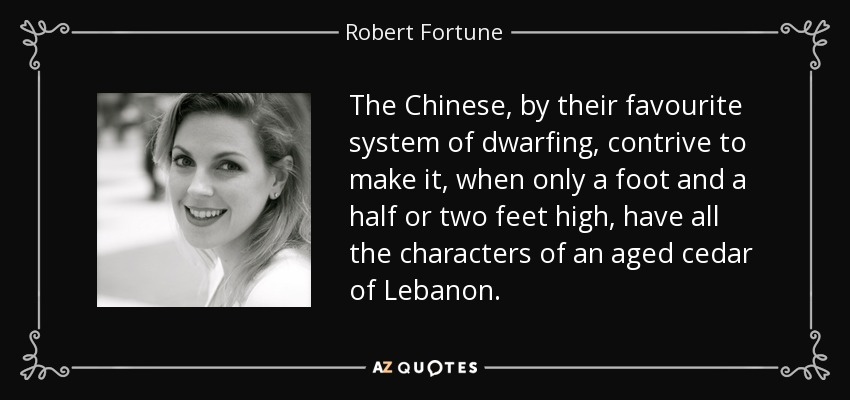 The Chinese, by their favourite system of dwarfing, contrive to make it, when only a foot and a half or two feet high, have all the characters of an aged cedar of Lebanon. - Robert Fortune