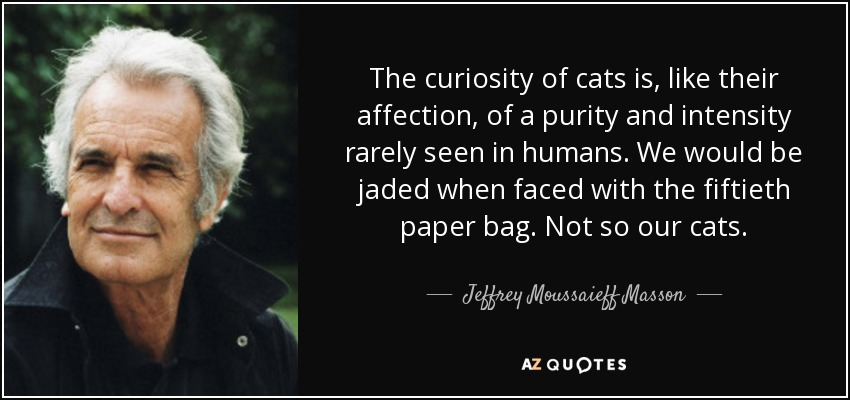 The curiosity of cats is, like their affection, of a purity and intensity rarely seen in humans. We would be jaded when faced with the fiftieth paper bag. Not so our cats. - Jeffrey Moussaieff Masson