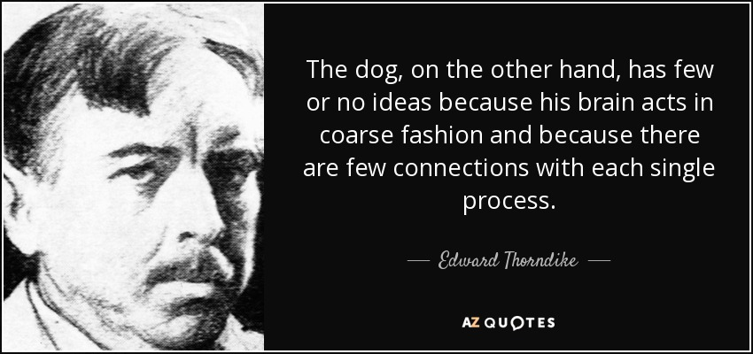 The dog, on the other hand, has few or no ideas because his brain acts in coarse fashion and because there are few connections with each single process. - Edward Thorndike