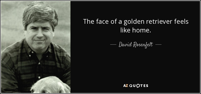 The face of a golden retriever feels like home. - David Rosenfelt