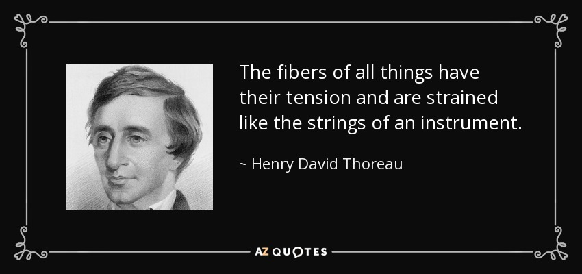 The fibers of all things have their tension and are strained like the strings of an instrument. - Henry David Thoreau