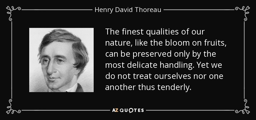 The finest qualities of our nature, like the bloom on fruits, can be preserved only by the most delicate handling. Yet we do not treat ourselves nor one another thus tenderly. - Henry David Thoreau