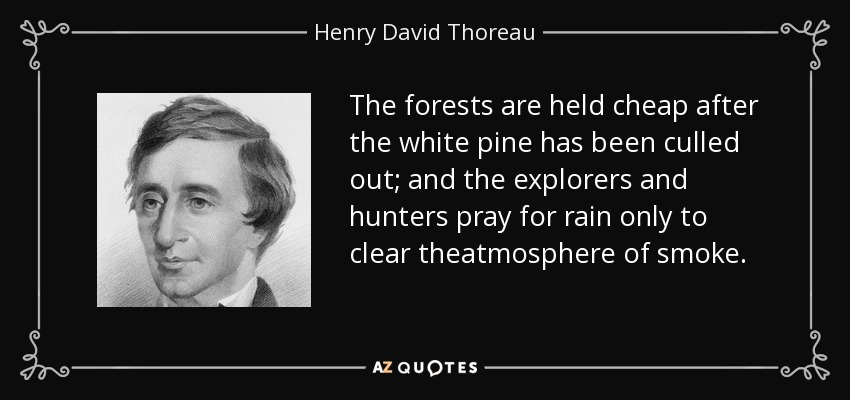 The forests are held cheap after the white pine has been culled out; and the explorers and hunters pray for rain only to clear theatmosphere of smoke. - Henry David Thoreau