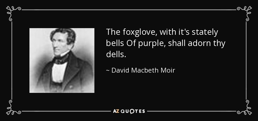 The foxglove, with it's stately bells Of purple, shall adorn thy dells. - David Macbeth Moir