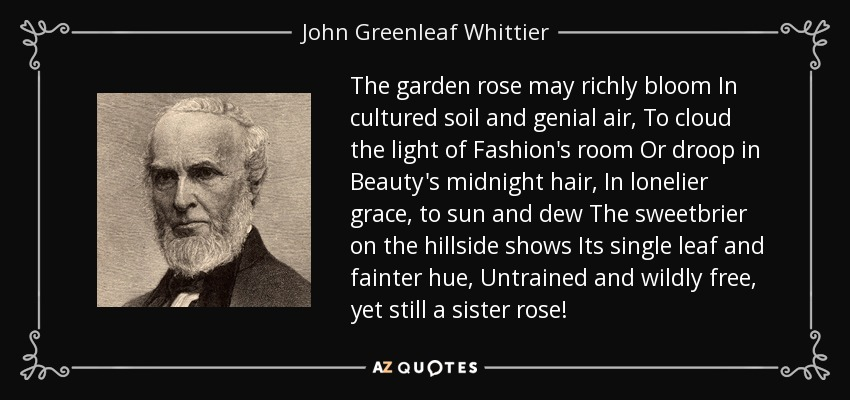 The garden rose may richly bloom In cultured soil and genial air, To cloud the light of Fashion's room Or droop in Beauty's midnight hair, In lonelier grace, to sun and dew The sweetbrier on the hillside shows Its single leaf and fainter hue, Untrained and wildly free, yet still a sister rose! - John Greenleaf Whittier