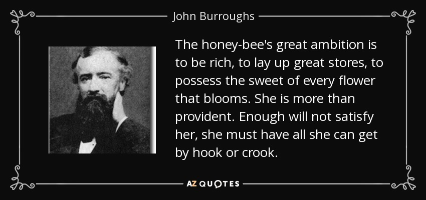 The honey-bee's great ambition is to be rich, to lay up great stores, to possess the sweet of every flower that blooms. She is more than provident. Enough will not satisfy her, she must have all she can get by hook or crook. - John Burroughs