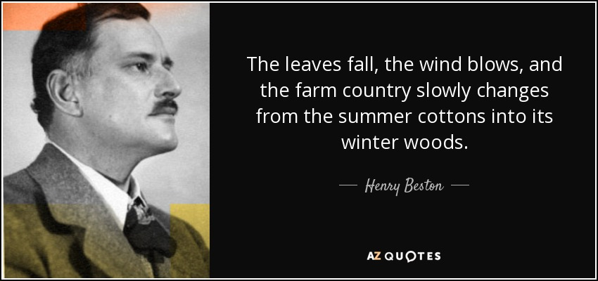 The leaves fall, the wind blows, and the farm country slowly changes from the summer cottons into its winter woods. - Henry Beston