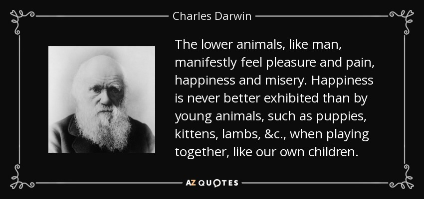 The lower animals, like man, manifestly feel pleasure and pain, happiness and misery. Happiness is never better exhibited than by young animals, such as puppies, kittens, lambs, &c., when playing together, like our own children. - Charles Darwin