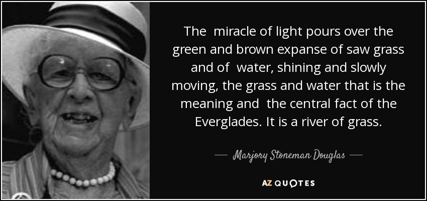 The miracle of light pours over the green and brown expanse of saw grass and of water, shining and slowly moving, the grass and water that is the meaning and the central fact of the Everglades. It is a river of grass. - Marjory Stoneman Douglas