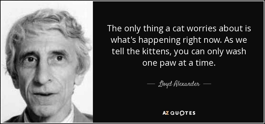 The only thing a cat worries about is what's happening right now. As we tell the kittens, you can only wash one paw at a time. - Lloyd Alexander