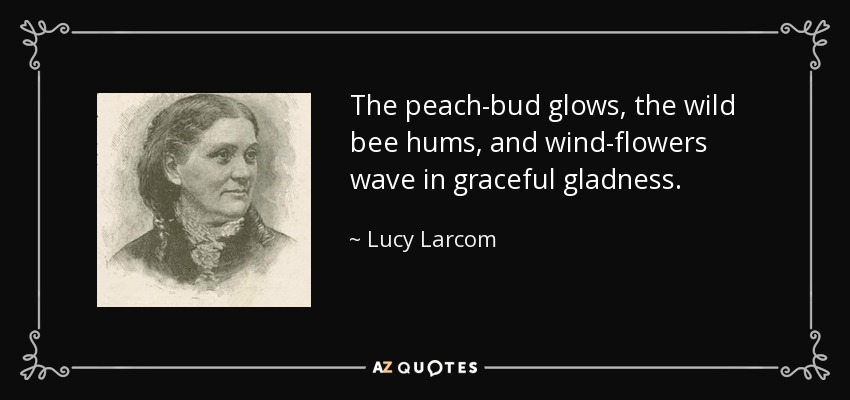 The peach-bud glows, the wild bee hums, and wind-flowers wave in graceful gladness. - Lucy Larcom