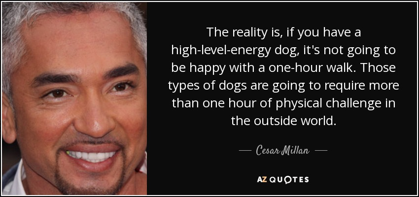 The reality is, if you have a high-level-energy dog, it's not going to be happy with a one-hour walk. Those types of dogs are going to require more than one hour of physical challenge in the outside world. - Cesar Millan