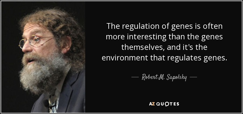 The regulation of genes is often more interesting than the genes themselves, and it's the environment that regulates genes. - Robert M. Sapolsky