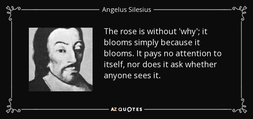The rose is without 'why'; it blooms simply because it blooms. It pays no attention to itself, nor does it ask whether anyone sees it. - Angelus Silesius