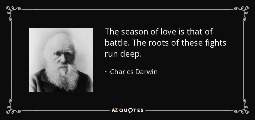 The season of love is that of battle. The roots of these fights run deep. - Charles Darwin