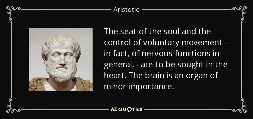 The seat of the soul and the control of voluntary movement - in fact, of nervous functions in general, - are to be sought in the heart. The brain is an organ of minor importance. - Aristotle