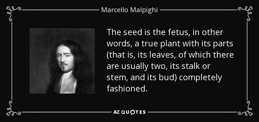 The seed is the fetus, in other words, a true plant with its parts (that is, its leaves, of which there are usually two, its stalk or stem, and its bud) completely fashioned. - Marcello Malpighi