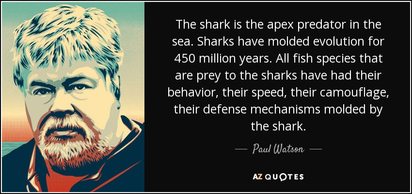 The shark is the apex predator in the sea. Sharks have molded evolution for 450 million years. All fish species that are prey to the sharks have had their behavior, their speed, their camouflage, their defense mechanisms molded by the shark. - Paul Watson
