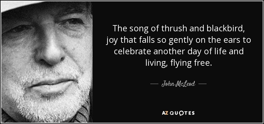 The song of thrush and blackbird, joy that falls so gently on the ears to celebrate another day of life and living, flying free. - John McLeod