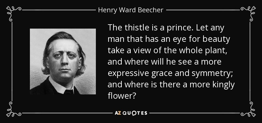 The thistle is a prince. Let any man that has an eye for beauty take a view of the whole plant, and where will he see a more expressive grace and symmetry; and where is there a more kingly flower? - Henry Ward Beecher