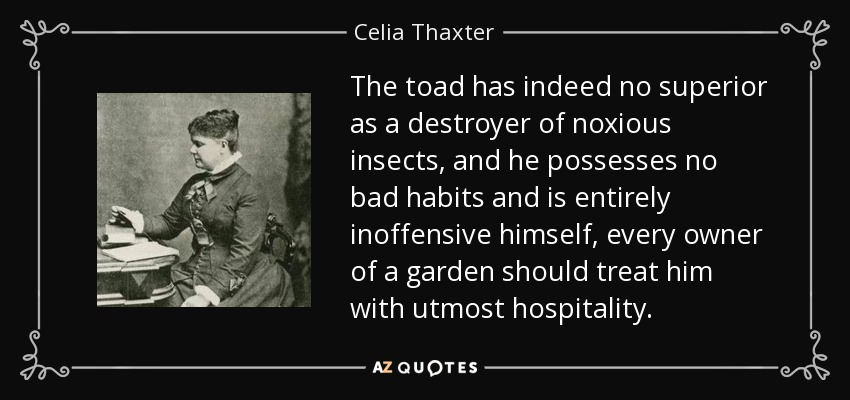 The toad has indeed no superior as a destroyer of noxious insects, and he possesses no bad habits and is entirely inoffensive himself, every owner of a garden should treat him with utmost hospitality. - Celia Thaxter