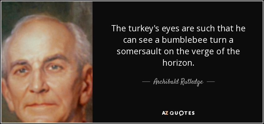 The turkey's eyes are such that he can see a bumblebee turn a somersault on the verge of the horizon. - Archibald Rutledge
