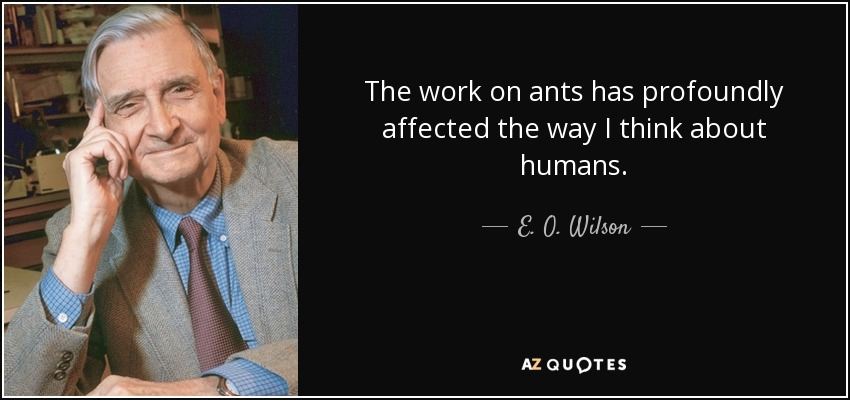 The work on ants has profoundly affected the way I think about humans. - E. O. Wilson