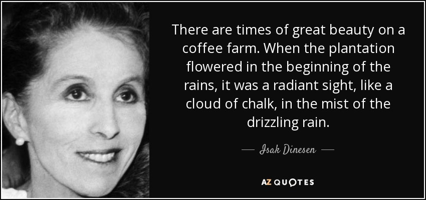There are times of great beauty on a coffee farm. When the plantation flowered in the beginning of the rains, it was a radiant sight, like a cloud of chalk, in the mist of the drizzling rain. - Isak Dinesen