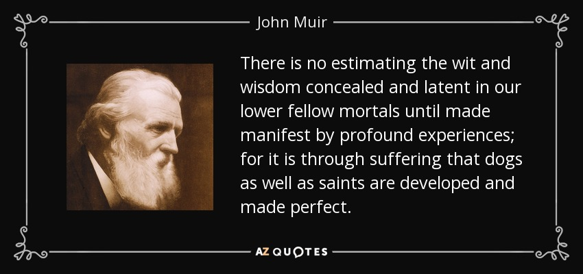 There is no estimating the wit and wisdom concealed and latent in our lower fellow mortals until made manifest by profound experiences; for it is through suffering that dogs as well as saints are developed and made perfect. - John Muir