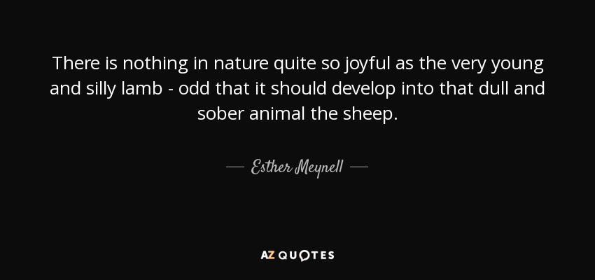 There is nothing in nature quite so joyful as the very young and silly lamb - odd that it should develop into that dull and sober animal the sheep. - Esther Meynell