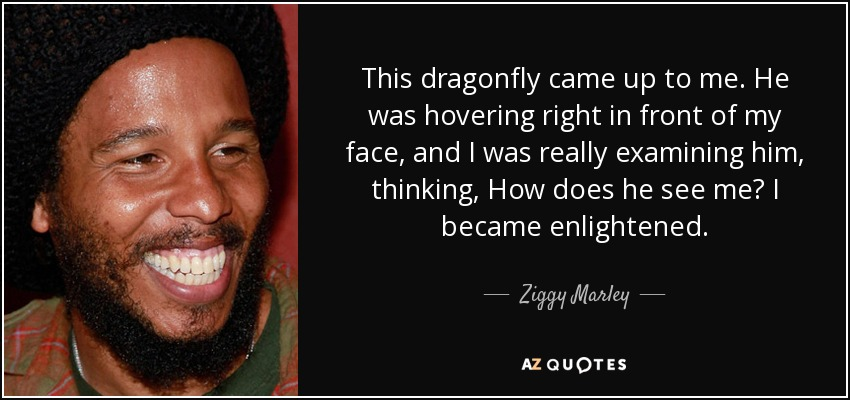 This dragonfly came up to me. He was hovering right in front of my face, and I was really examining him, thinking, How does he see me? I became enlightened. - Ziggy Marley
