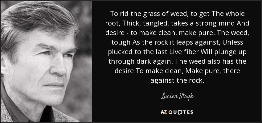 To rid the grass of weed, to get The whole root, Thick, tangled, takes a strong mind And desire - to make clean, make pure. The weed, tough As the rock it leaps against, Unless plucked to the last Live fiber Will plunge up through dark again. The weed also has the desire To make clean, Make pure, there against the rock. - Lucien Stryk