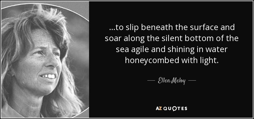 ...to slip beneath the surface and soar along the silent bottom of the sea agile and shining in water honeycombed with light. - Ellen Meloy