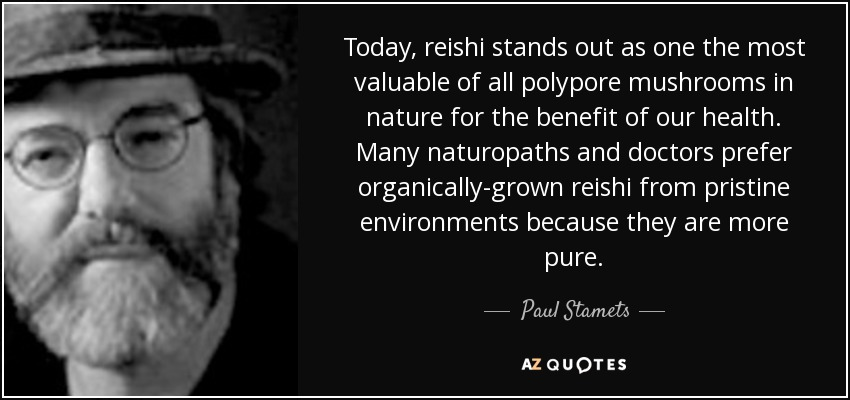 Today, reishi stands out as one the most valuable of all polypore mushrooms in nature for the benefit of our health. Many naturopaths and doctors prefer organically-grown reishi from pristine environments because they are more pure. - Paul Stamets