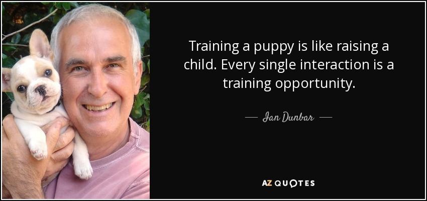 Training a puppy is like raising a child. Every single interaction is a training opportunity. - Ian Dunbar